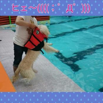 PhotoGrid_1404628272407.jpg