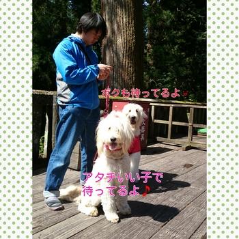 PhotoGrid_1430999364971.jpg