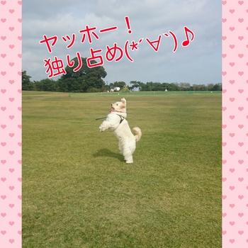 PhotoGrid_1446210618195.jpg
