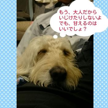 PhotoGrid_1458057048301.jpg