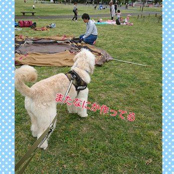 PhotoGrid_1494771163670.jpg