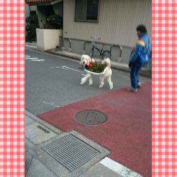 PhotoGrid_1420458535106.jpg