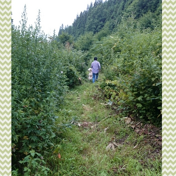 PhotoGrid_1471696494551.jpg