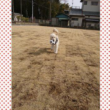 PhotoGrid_1490269556655.jpg