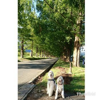 PhotoGrid_1507895146651.jpg
