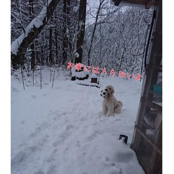 PhotoGrid_1511703699110.jpg